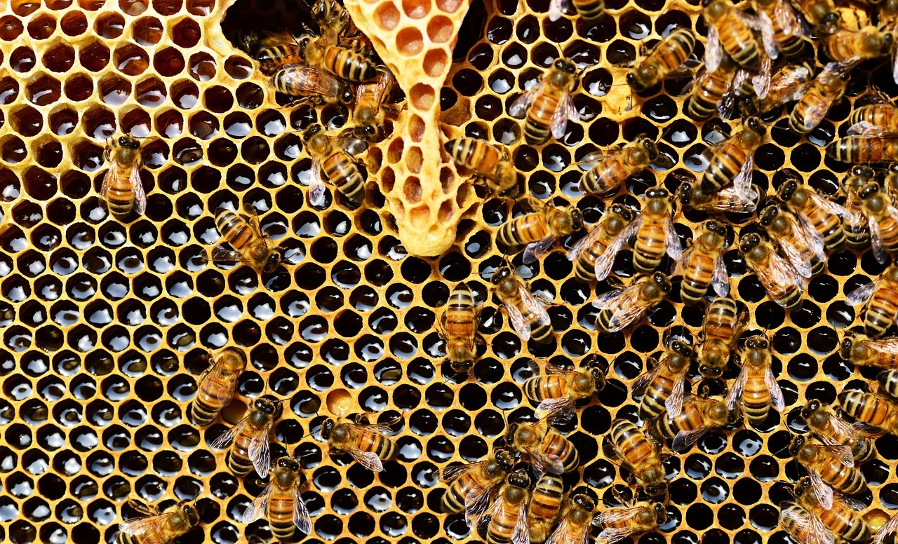 Bees in beehive