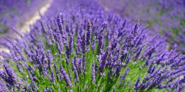 8 cvetlic, ki jih lahko tudi pojemo