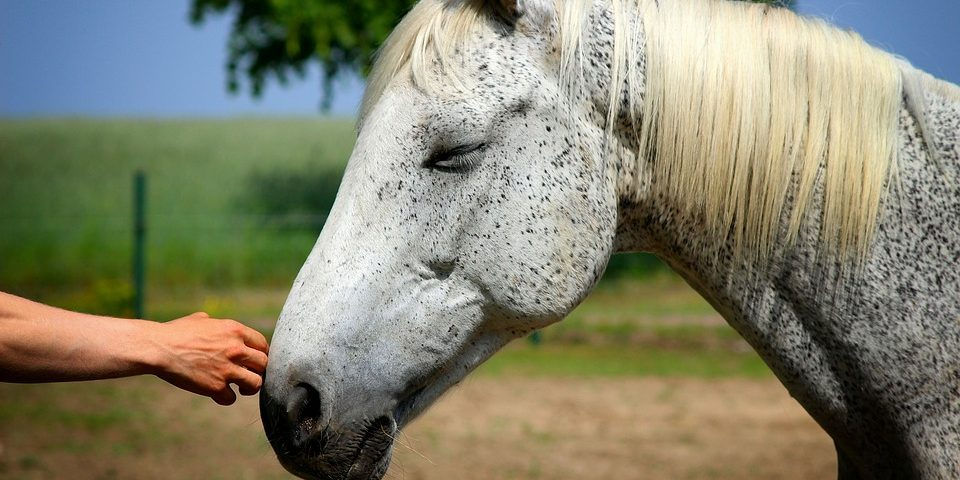 HORSE-THERAPY