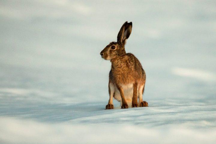 web 3 rabbit